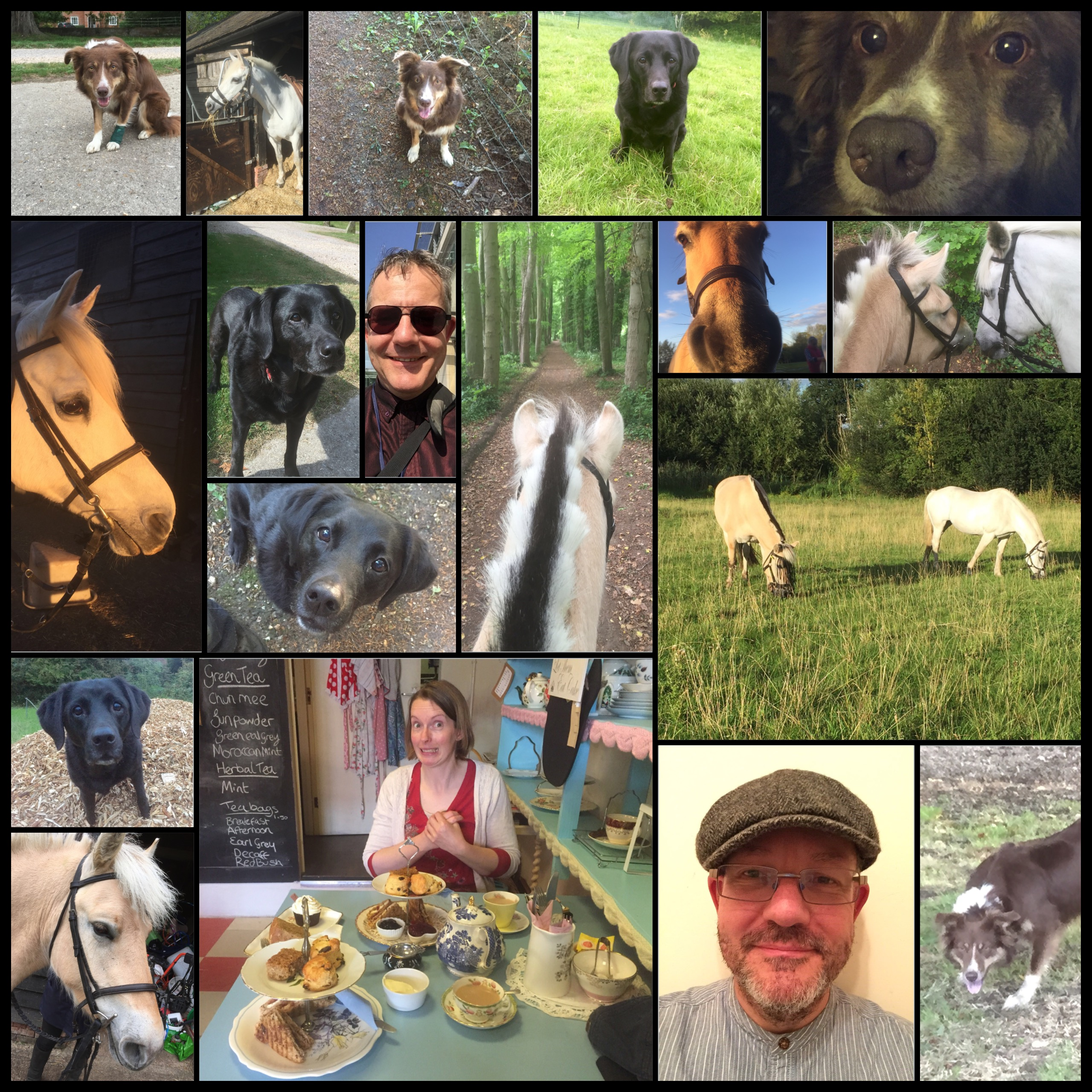 Montage of dogs and horses